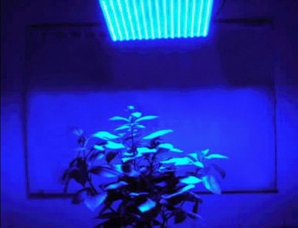 4 Feet 330 SMD Leds Blue Fluorescent T8 Tube Plant Grow Light 18w=54W