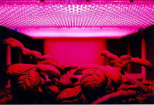 4 Feet 216 SMD Leds Red Fluorescent T8 Tube Plant Grow Light 12w=36W